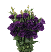 Эустома(Лизиантус) махровая (Eustoma grandiflorum) Advantage Purple, 5 шт.